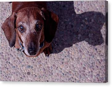 Canvas Print featuring the photograph Lucy by Lora Lee Chapman