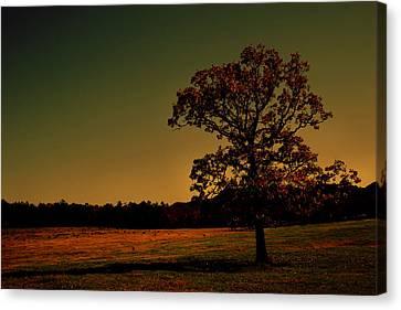 Lullabye Tree Canvas Print by Nina Fosdick