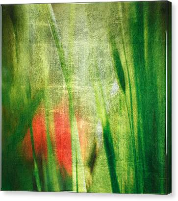 Luminous Grasses #6071 Canvas Print by Mark Stephenson