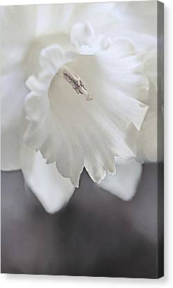 Canvas Print featuring the photograph Luminous Ivory Daffodil Flower by Jennie Marie Schell