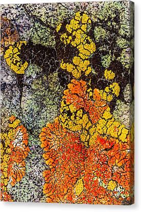 Canvas Print - Lumpy Lichen by Jean Noren
