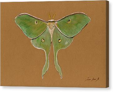 Luna Moth Canvas Print by Juan Bosco