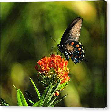 Lunch Canvas Print by Rick Friedle