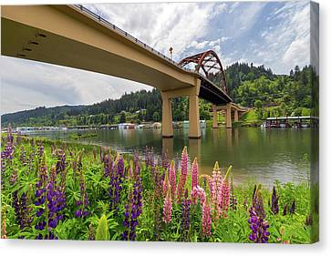 Lupine In Bloom By Sauvie Island Bridge Canvas Print by David Gn