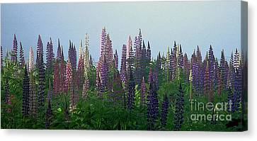 Lupine In Morning Light Canvas Print by Christopher Mace