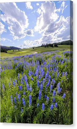 Lupine Pass Canvas Print