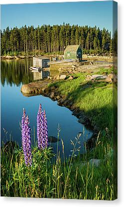 Lupines At The Shack - Vertical Canvas Print by Michael Blanchette