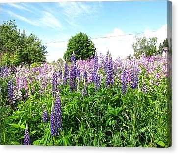 Lupins And Flocks Canvas Print by Melissa Parks