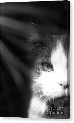 Lurking In The Shadows - Black And White Canvas Print by Scott D Van Osdol