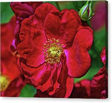 Canvas Print - Luscious Red With Effects by Lynda Lehmann