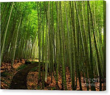 Lush Bamboo Forest Canvas Print