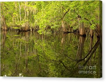 Lush Green Reflections At Manatee Springs Canvas Print
