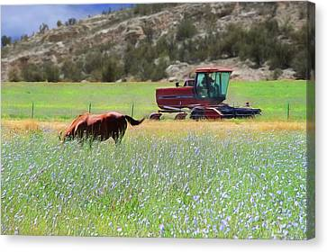 Verde Valley Canvas Print - Lush Pastures by Donna Kennedy