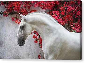 Lusitano Portrait In Red Flowers Canvas Print