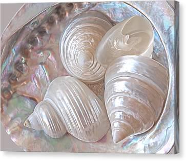 Lustrous Shells Canvas Print