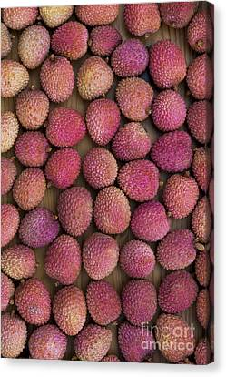 Lychee Fruit Canvas Print by Tim Gainey