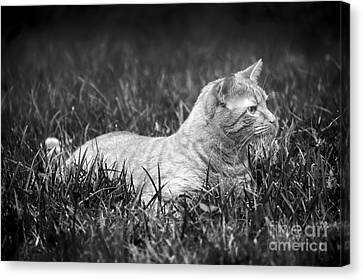 Lying In Wait Canvas Print