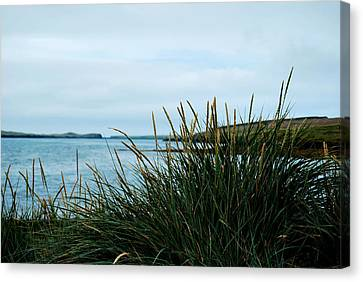 Canvas Print featuring the photograph Lyme Grass by Marilynne Bull