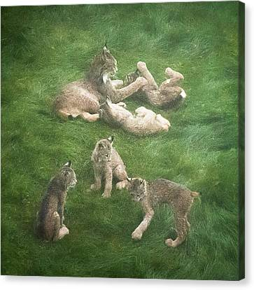 Canvas Print featuring the photograph Lynx In The Mist by Tim Newton