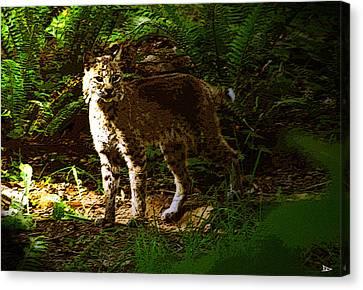 Lynx Rufus Canvas Print by David Lee Thompson