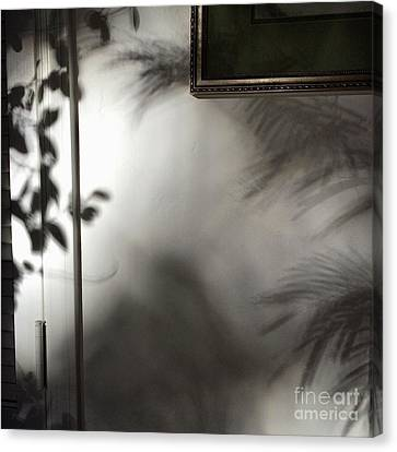 Canvas Print featuring the photograph Lysiloma Shadows by Kim Nelson
