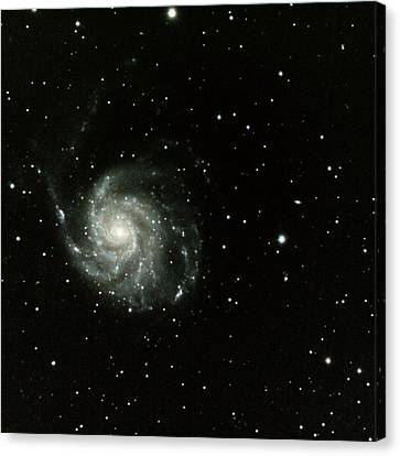 M-101, The Pinwheel Galaxy Canvas Print by A. V. Ley