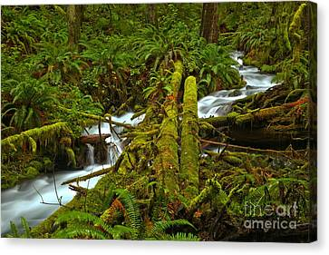 A Stream Of Tranquility Canvas Print by Adam Jewell