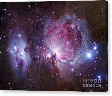 M42, The Orion Nebula Top, And Ngc Canvas Print