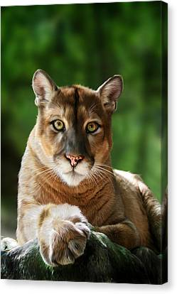 Mac Canvas Print by Big Cat Rescue