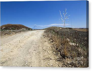 Macadam Road And Smoking Etna Canvas Print by Wolfgang Steiner