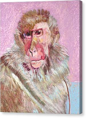 Macaque Canvas Print by Jamie Downs