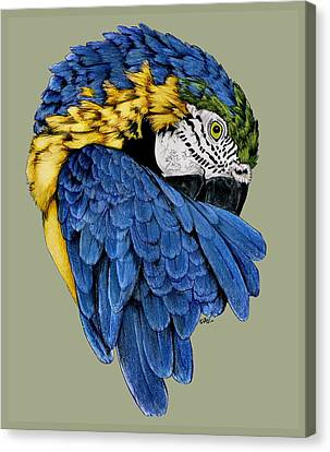 Macaw Canvas Print - Macaw by Crystal Rolfe