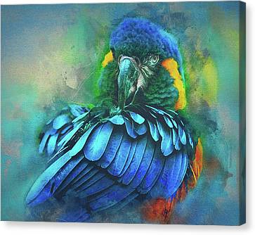 Macaw Magic Canvas Print by Brian Tarr