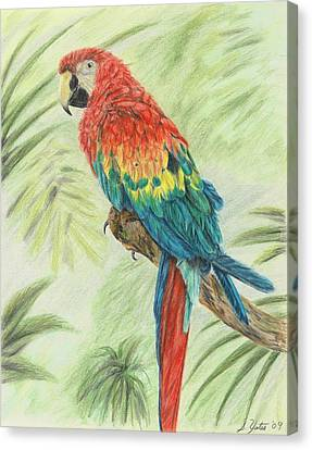 Macaw Canvas Print - Macaw by Stephanie Yates