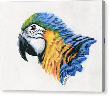 Macaw Canvas Print - Macaw Study by Heather Mitchell
