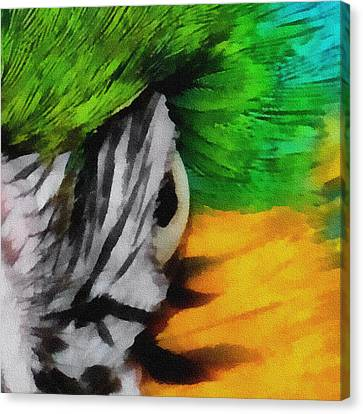 Blue And Gold Macaw Canvas Print - Macaw Upclose 3 by Ernie Echols
