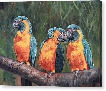 Canvas Print featuring the painting Macaws by David Stribbling