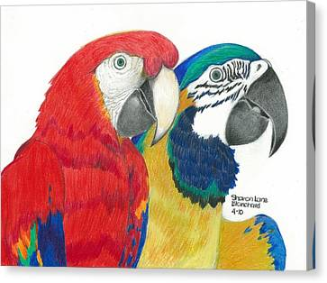 Macaw Canvas Print - Macaws In Living Color by Sharon Blanchard