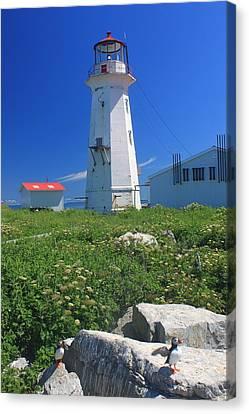 Machias Seal Island Lighthouse Puffins Canvas Print by John Burk