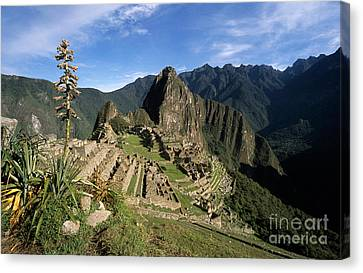 Machu Picchu And Bromeliad Canvas Print by James Brunker