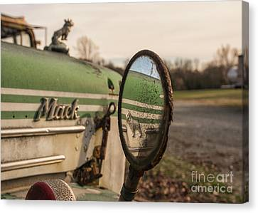 Bulls Canvas Print - Mack Reflection by Terry Rowe