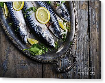 Mackerels On Silver Plate Canvas Print by Jelena Jovanovic