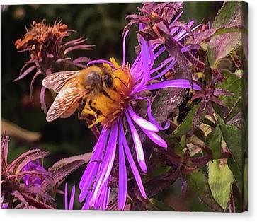 Flowers Canvas Print - Macro Bee IIi by Paul Shefferly