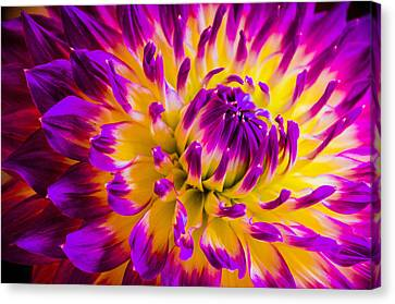 Macro Flora Canvas Print by Bruce Pritchett