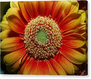 Canvas Print featuring the photograph Macro Flower by Michael Canning