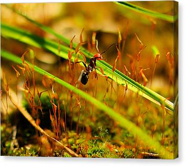 Macro Of An Ant Canvas Print by Jeff Swan