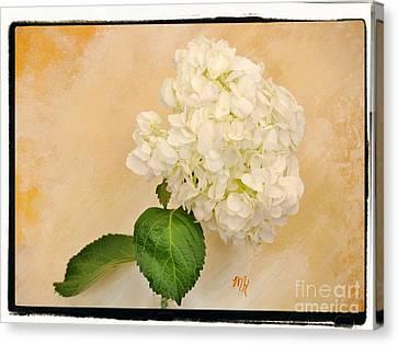 Curtains Canvas Print - Macro White Hydrangea by Marsha Heiken