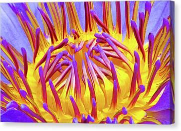 Canvas Print - Macro's Lotus by Cesar Vieira