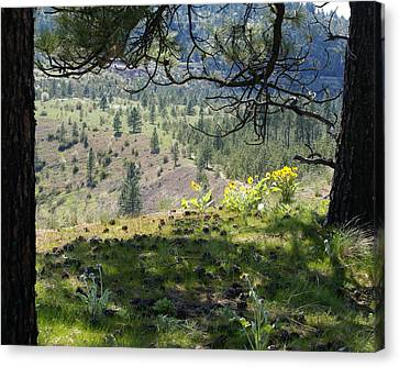 Canvas Print featuring the photograph Made In The Shade by Ben Upham III