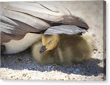 Baby Bird Canvas Print - Made In The Shade by Donna Kennedy